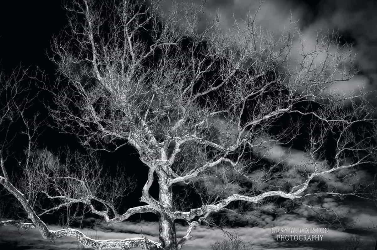 scenic-photography-019